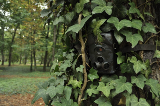 How to hide the trail camera a few words about disguising the device