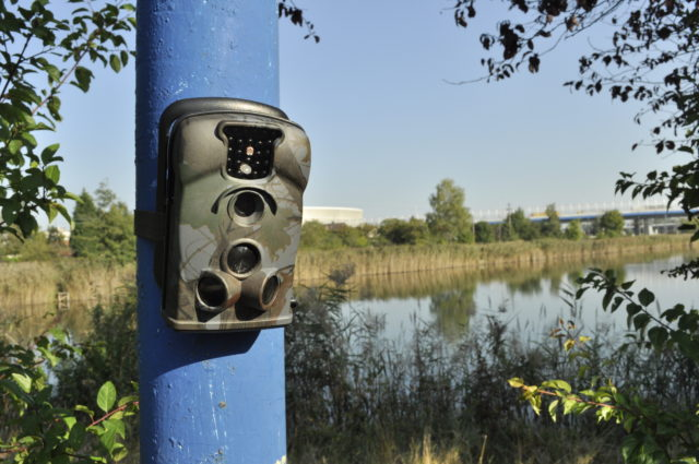 Wildlife outdoor cameras for protection of fish ponds